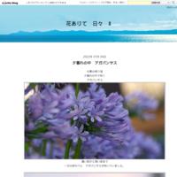 向日葵畑2013年の - 花ありて 日々 Ⅱ