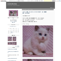 ラグドールの子猫ちゃん家族募集 4月9日生まれ - carolcollection