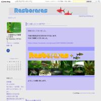 60cm水槽B ウロフタルモイデス171017 - Rasboraras