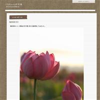 薔薇(越後丘陵公園) - くろちゃんの写真
