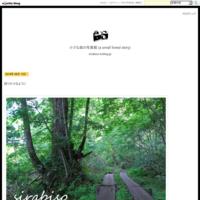 開けた夕空 - 小さな森の写真館 (a small forest story)