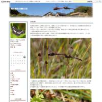 丸太にしがみついて - 蝶と蜻蛉の撮影日記