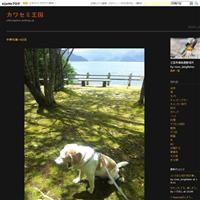 八島ヶ原湿原の空撮 - カワセミ王国