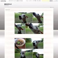 土師ダムさんぽ - 厨房を見守る犬