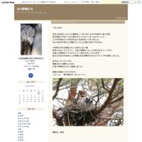 キジバト - 北の野鳥たち