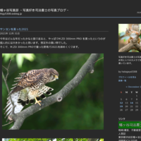 MIYASHITA PARK - 幡ヶ谷写真部 ~写真好き司法書士の写真ブログ~