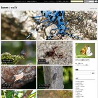 ブチヒゲハナカミキリ - Insect walk