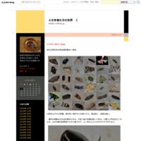 シマゲンゴロウ   7056 - 小さき者たちの世界 2
