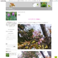 霧島神宮 - だんご虫の花
