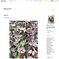 Zapallito Italiano - Gardener*s Diary