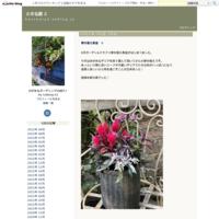 クリスマスローズ・フェチダス - 小さな庭 2