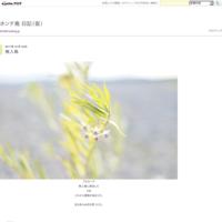 ひまわり畑 - ホンテ島 日記