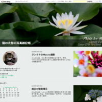 印象的なタマスダレ - 猫の太郎の写真雑記帳