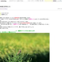 荒れる海 - 綺麗な野鳥たち