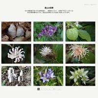ウメ梅オシドリ - 里山の四季