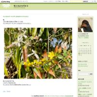 わかさぎ釣り@長谷大池 - モンスとツバメ3