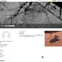ミミズク - スーの生き物図鑑