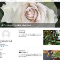 今期初!蕾見つけました♪ - 美しく香りも素晴らしい薔薇 ガブリエル ベランダ栽培