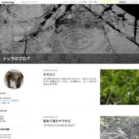イワタバコ・クサアジサイ - トレヲのブログ