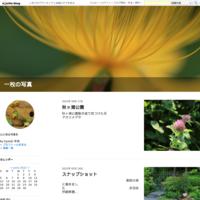 撮りためたもの令和元年11月26日 - 一枚の写真