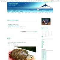 新入荷 10/13 - 大森町水族館