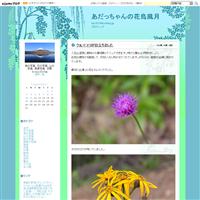 コオバシギ - あだっちゃんの花鳥風月