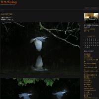 二か月ぶりのヤマセミ - MパパBlog