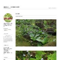 紫式部の花に水滴が - 旧軽井沢より  つるや旅館からのお便り
