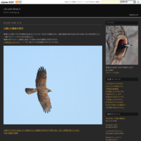 ホームページ更新(一人っ子のオオタカ幼鳥) - Life with Birds 3