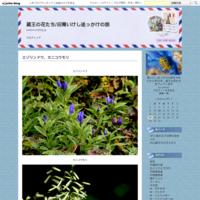 蔵王のお釜とハクサンチドリ - 蔵王の花たち/旧青いけし追っかけの旅