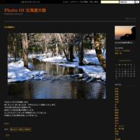 コスモス② - Photo Of 北海道大陸