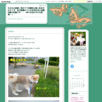【転載】14匹のワンコ達の里親さん、預かりさんを募集しています! - もももの部屋(家族を待っている保護犬たちと我家の愛犬のブログです)