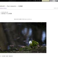 雨上がりの水芭蕉 - ekkoの --- four seasons --- 北海道