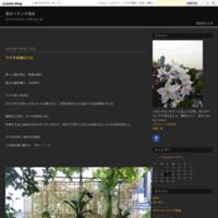 BORO - 東京ベランダ通信