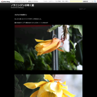 雪解-2イスカの群れ - ノラニンジンの咲く庭
