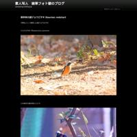 伊良湖岬のハチクマOriental honey-buzzard - 素人写人 雑草フォト爺のブログ