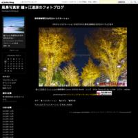 北浅羽桜堤公園の桜並木埼玉県 - 風景写真家 鐘ヶ江道彦のフォトブログ