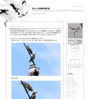 田圃(2021年8月1日) - ほとんど野鳥写真日記