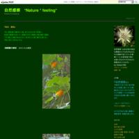 #ラン科 『百足蘭』 Pelatantheria scolopendrifolia - 自然感察 *nature feeling*