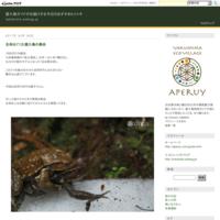 太忠岳へ Play Yakushima2 - 屋久島ガイドがお届けする今日のおすすめヒトトキ