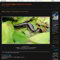 """""""雨の隙間"""" その4 @M.ZUIKO DIGITAL ED 40-150mm F2.8 Pro - ルリビタキの気まぐれPATA*PATA"""
