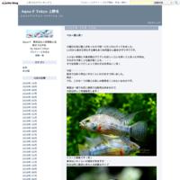 ブリードプレコ - Aqua-F Tokyo 上野毛