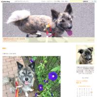 ついに梅雨入り - 琉球犬mix白トゥラーのピカ