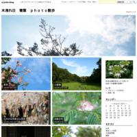 石蕗の花 - 木洩れ日 青葉 photo散歩