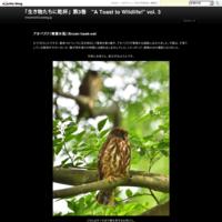 """オオワシ(大鷲)とオジロワシ(尾白鷲)/Steller's sea eagle & White-tailed eagle - 「生き物たちに乾杯」 第3巻 """"A Toast to Wildlife!"""" vol. 3"""