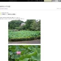21東京18(N公園カワウ) - 徒然カメラ日記