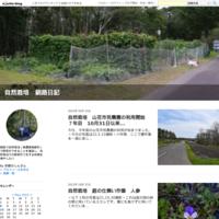 自然栽培4日ぶり野菜が成長ニジュウヤホシテントウ虫 - 自然栽培 釧路日記