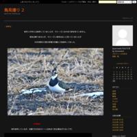 ・アカエリヒレアシシギ - 鳥見撮り 2