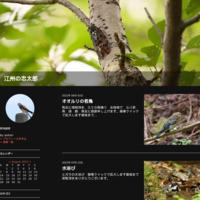 ヒヨドリ - 江州の忠太郎