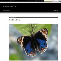 ベニマシコ - トレヲのブログ 3